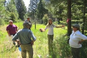 Logging, burns proposed for 20K acres near Alberton