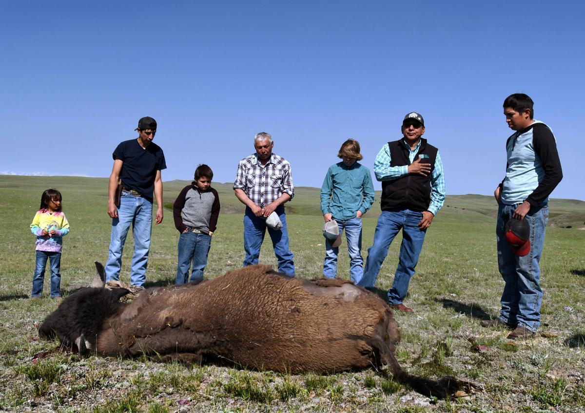 061619 blackfeet buffalo1 kw.jpg