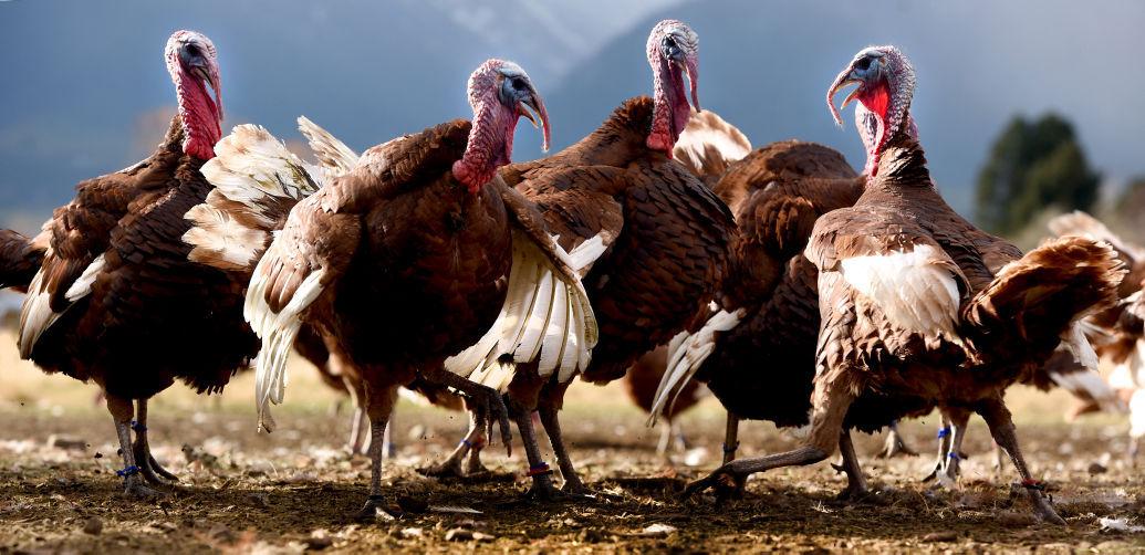112215 turkey1 kw.jpg