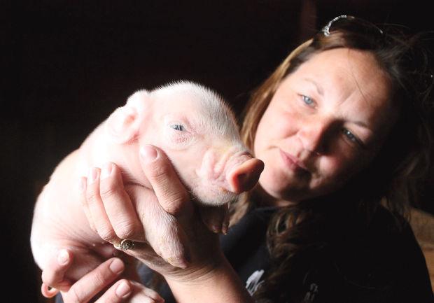 pig farmer1
