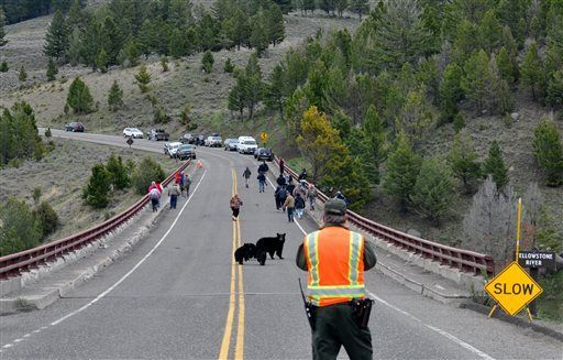 051415-mis-out-yellowstone-bears