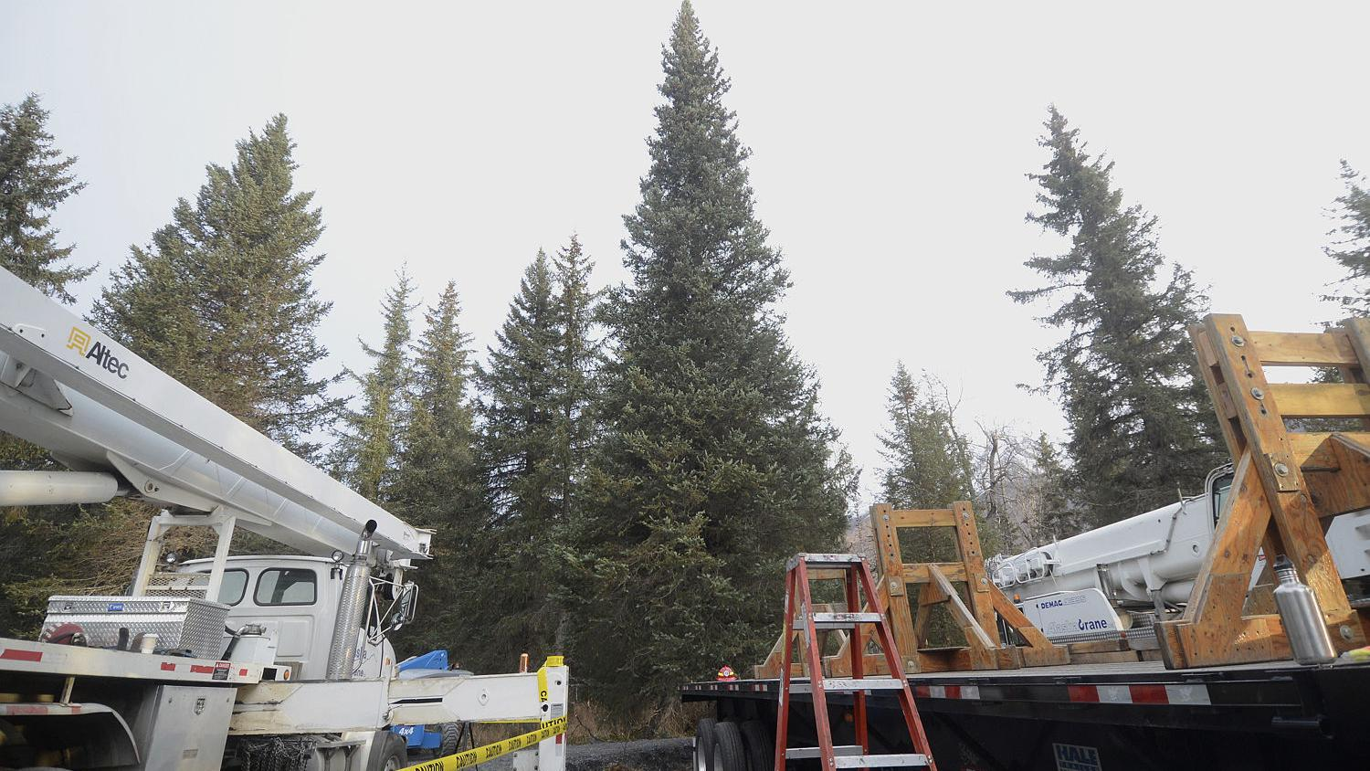 Search is on in NW Montana for perfect Capitol Christmas tree for Washington, D.C