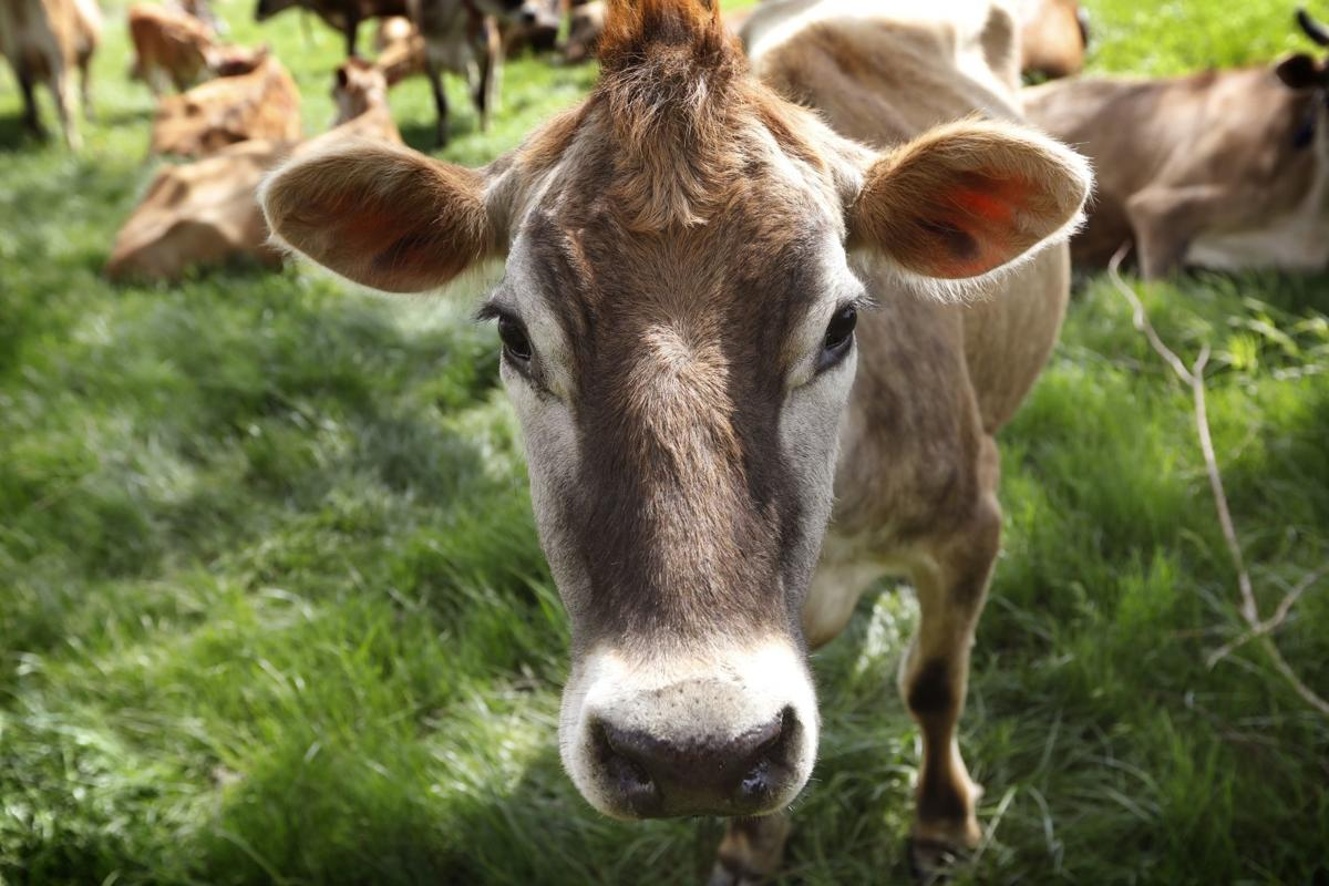 Small Dairies Fight Back