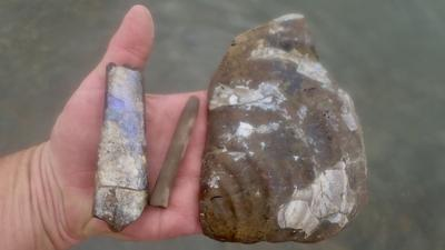 A fossil baculite, squid, and the imprint of a clam shell, snapshots of a watery world from 135 million years ago.