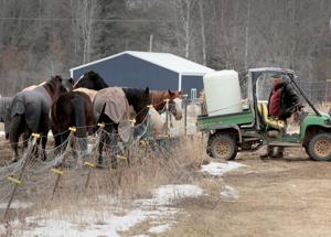 Hay from Wyoming, South Dakota tainted by toxic beetles kills 14 horses in Wisconsin