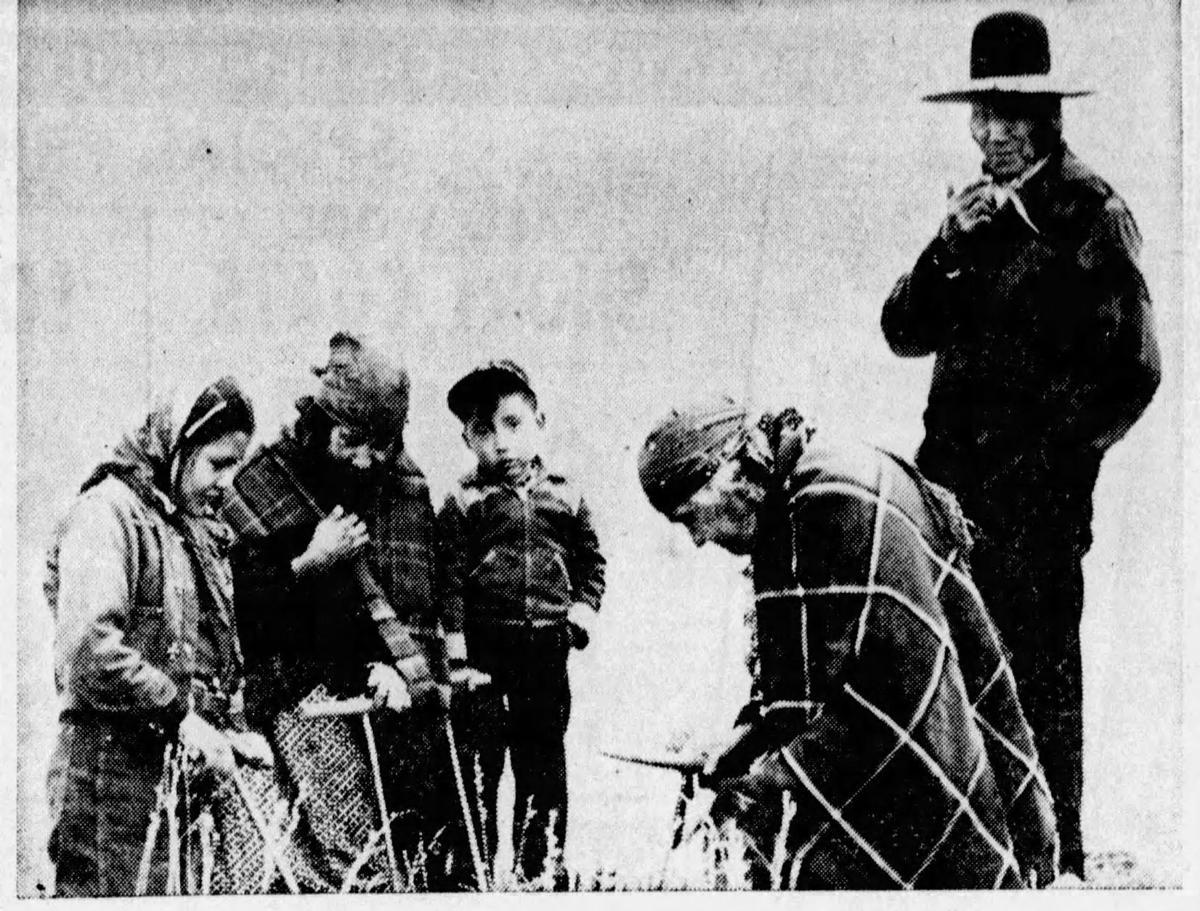 Sophie Moiese 1952 digging bitterroots