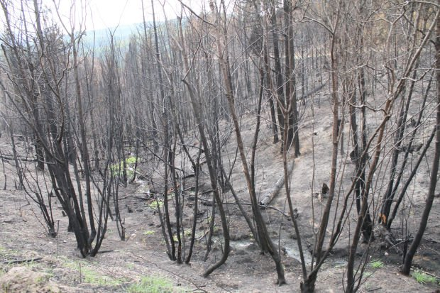 Nearly 7,000 acres of Plum Creek land was burned