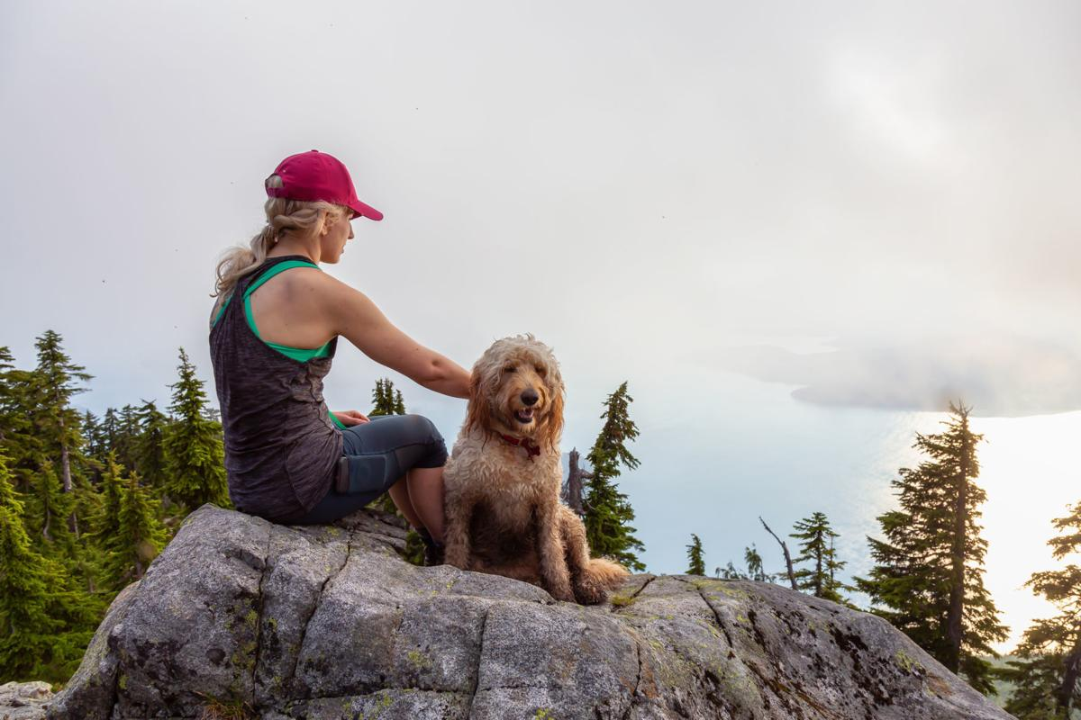 Tips For a Fun and Safe Hiking Experience With Your Pooch (image)