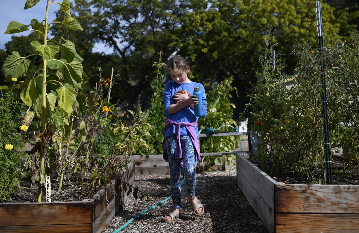 Students pick their own veggies in after school garden - Bell gardens high school school loop ...