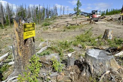 New Timber Sale Near Chessman Reservoir