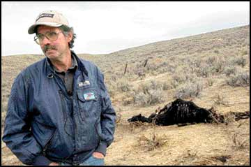 Ranchers frustrated as wolves run wild