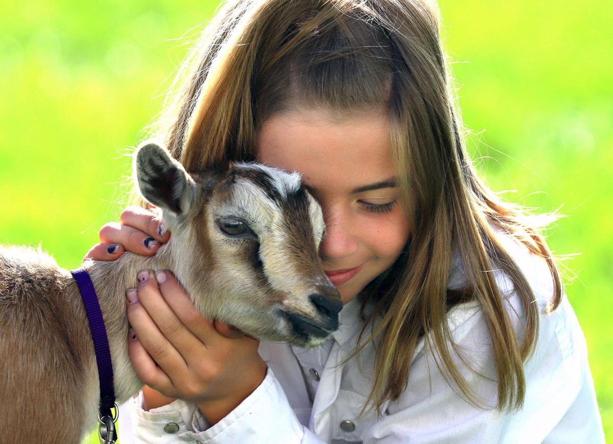 Bring on the goats: Ravalli County fair week gets started with goat show