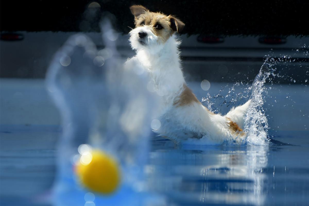 081119 dock dogs-1-tm.jpg