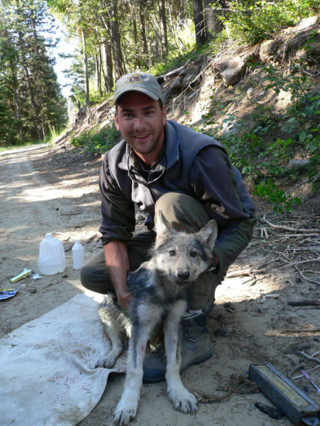A technician with Montana Fish, Wildlife and Parks