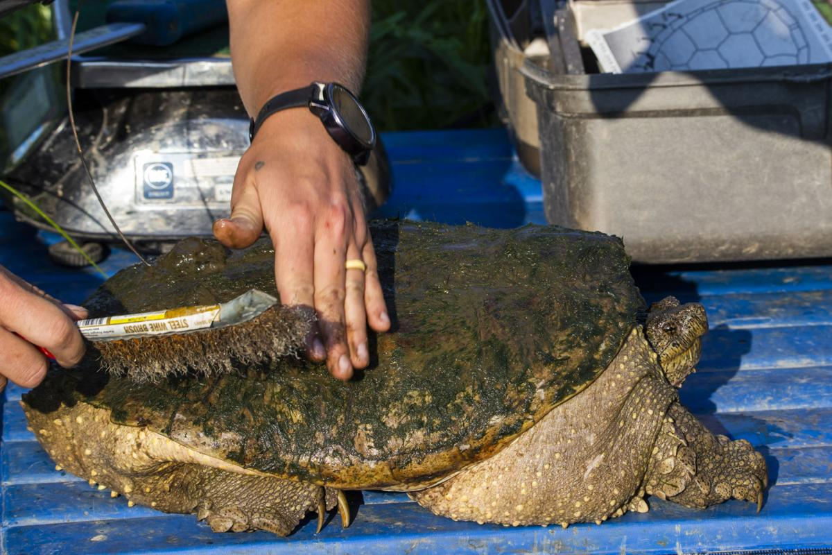 RMC Turtles