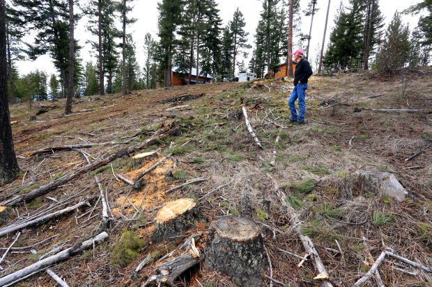Fuel reduction: Grant program helps landowners pay for ...