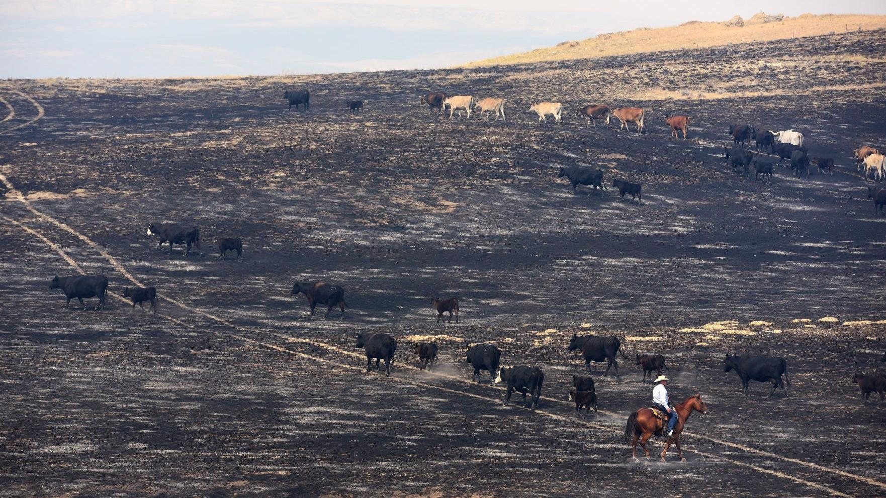 Evacuation order lifted for property owners threatened by Lodgepole Complex fire