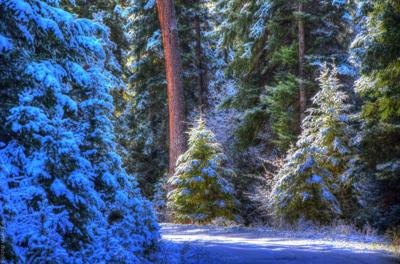 Cut Your Own Christmas Tree.Guidelines For Cutting Your Own Christmas Tree Local