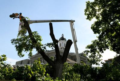 062817 courthouse tree removal kw.jpg