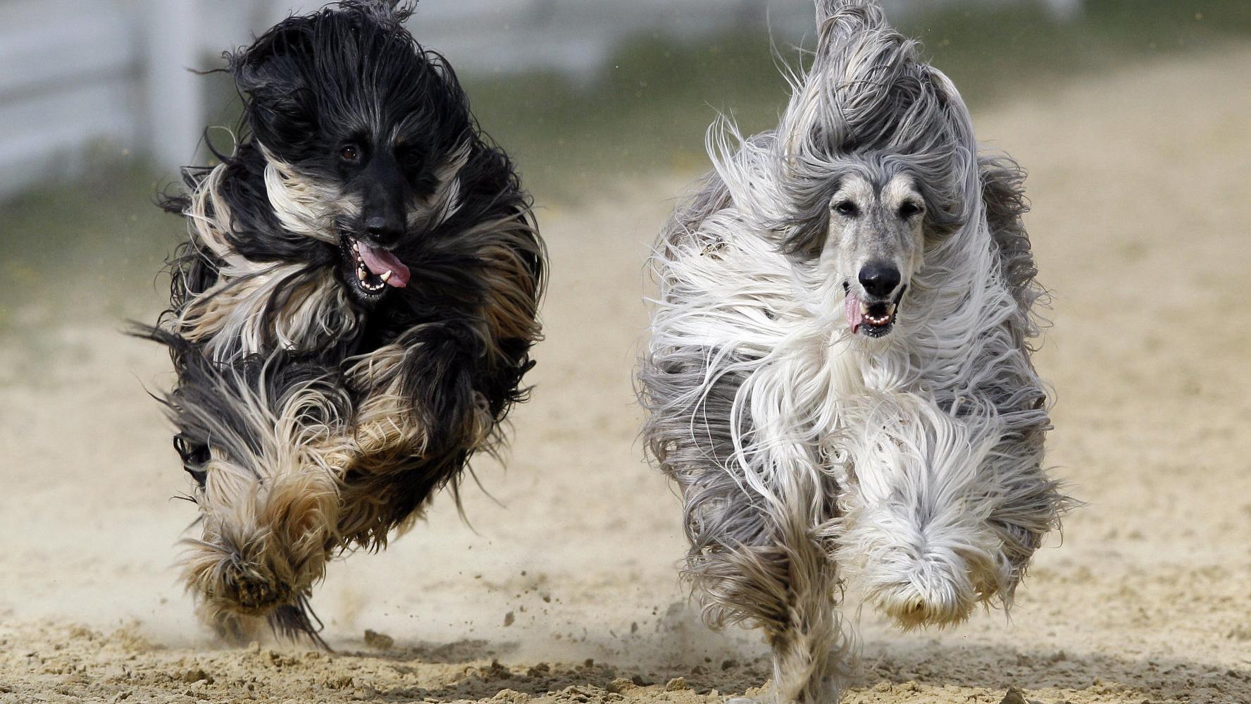 Meet the 19 least intelligent dogs