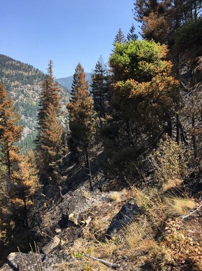 Beeskove fire Aug. 7, 2019