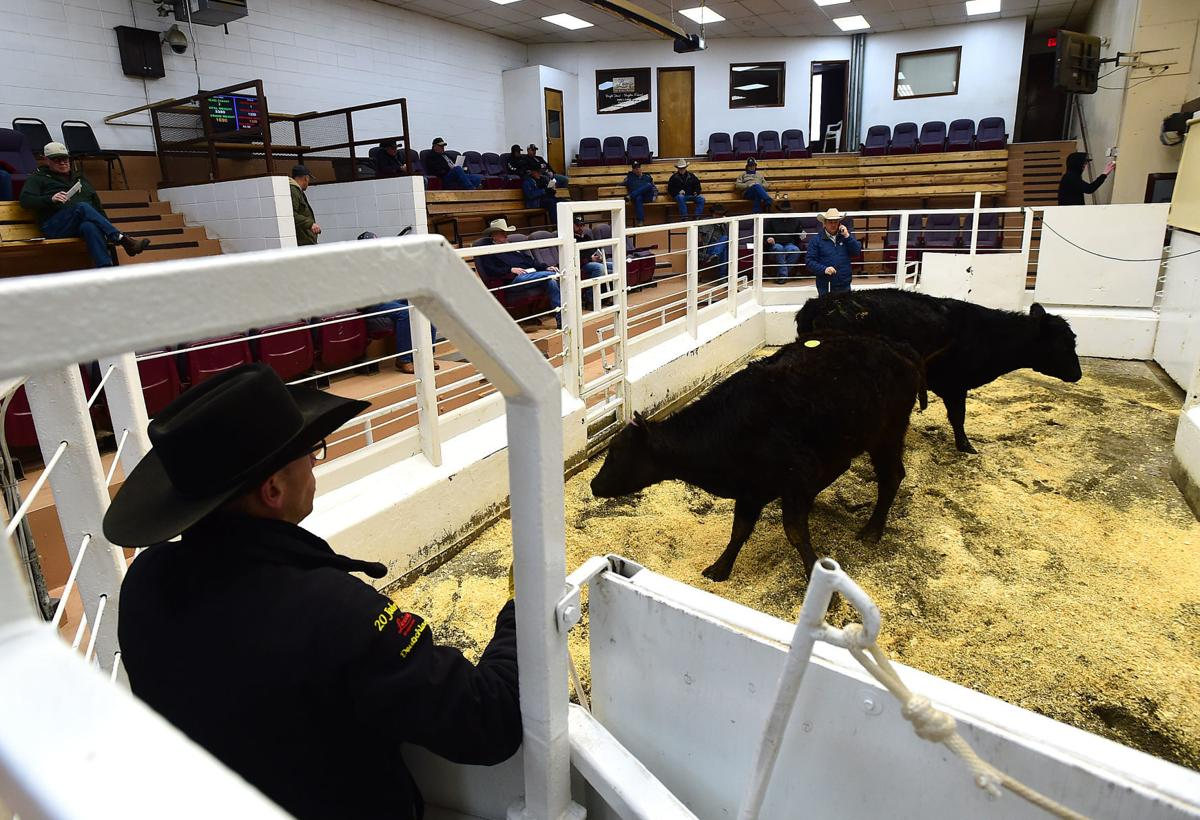 Billings Livestock sale