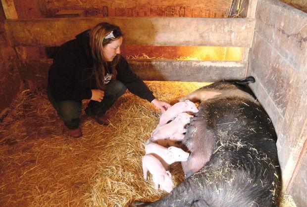 pig farmer2