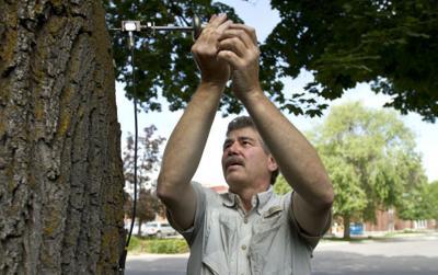 071014 tree sensor kjw