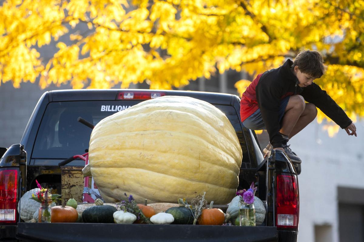 6 months, 600-pound pumpkin