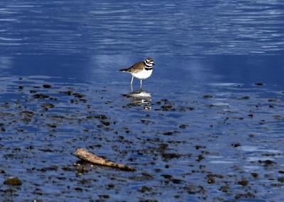 Audubon Field Trip 3