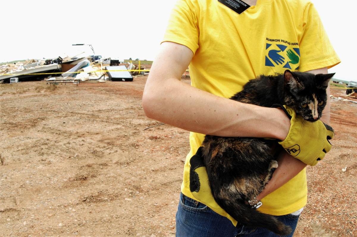 A cat found in the rubble
