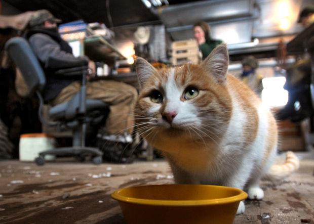 A barn cat named Scratch