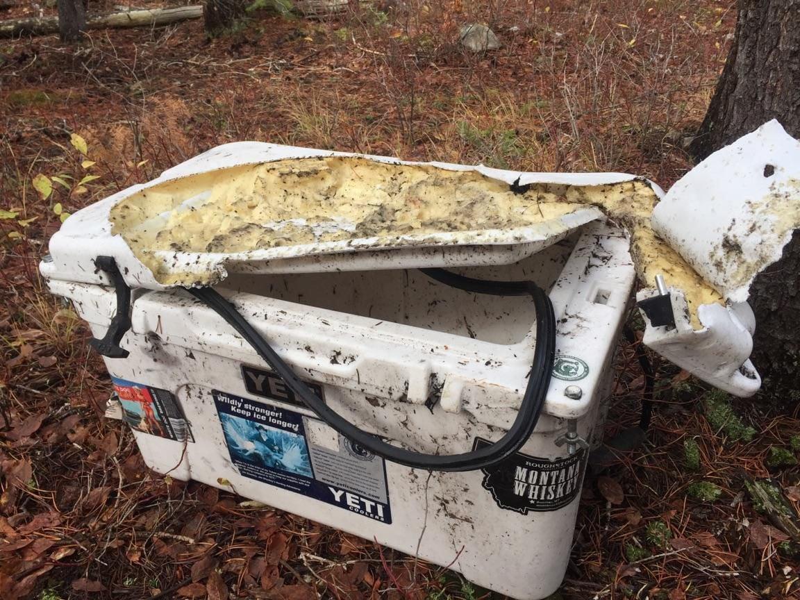 Bear resistant cooler damage