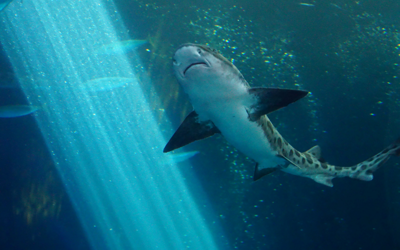 Trending From The Tank: Check Out These 15 Shark Tank Favorites