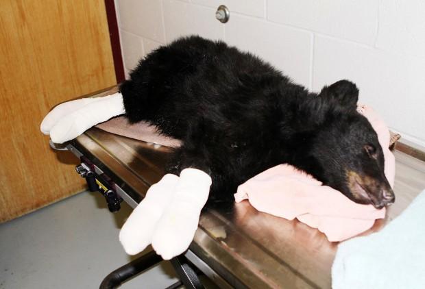 123012 eoy burned bear.jpg