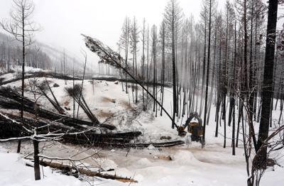Salvage Logging