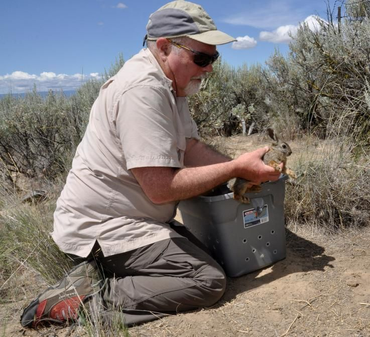 Peter Lancaster releases a breeding pygmy on his land.