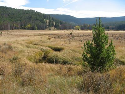 Zekes Meadow