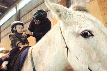 Tall in the saddle: Sitting atop a horse - or mule - benefits special needs people
