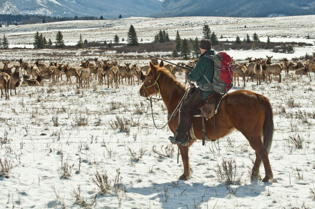 Elk research (IR copy)