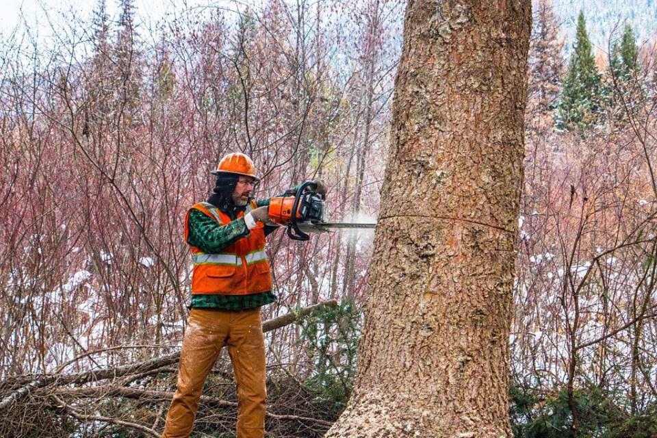 Kết quả hình ảnh cho logging