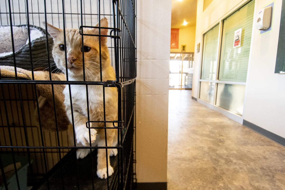 Cat Adoptions 02