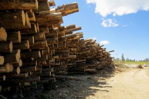 Judge declines to halt Helena-area forestry project