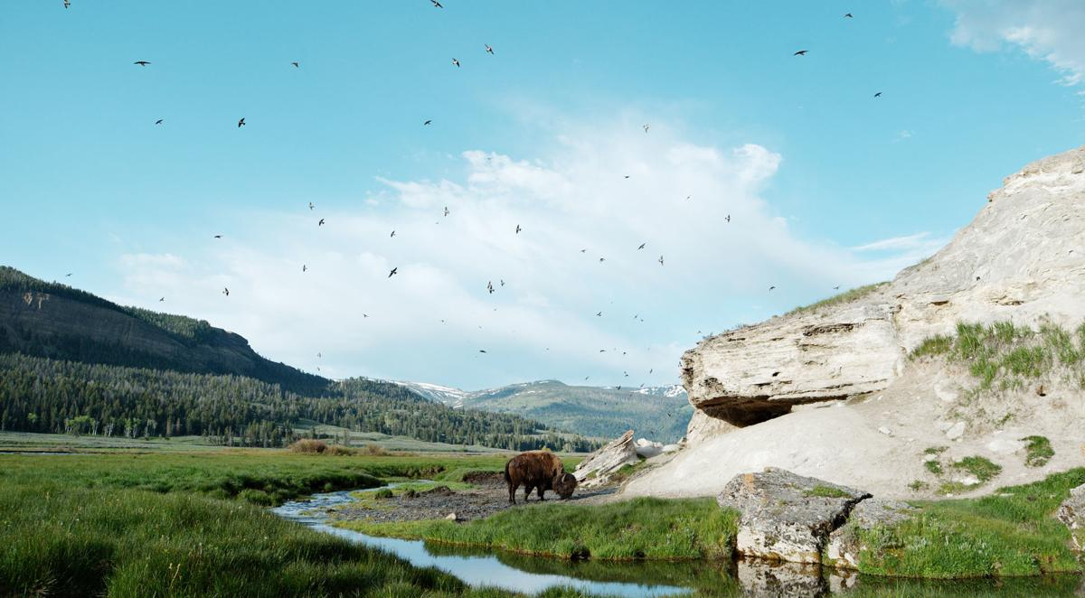 'Epic Yellowstone: Life on a Wing'