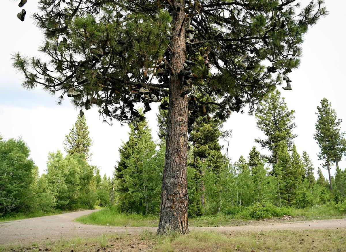 Boot Tree 1