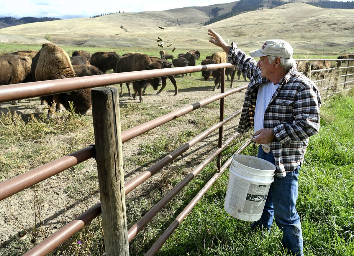 Bison Ranch 1