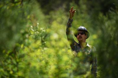 In the cut: Trail workers revive saw skills