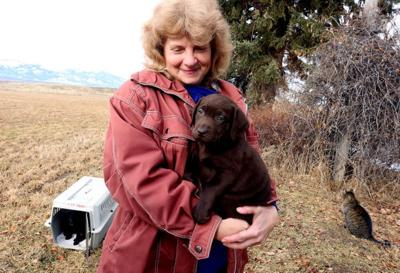 Attempts to license dog breeders again fail to advance in