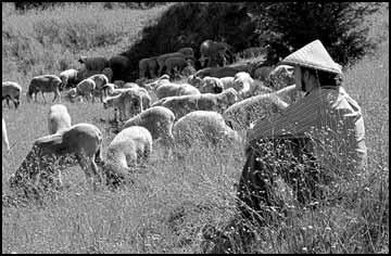 Mount Jumbo: Putting the herd on weeds