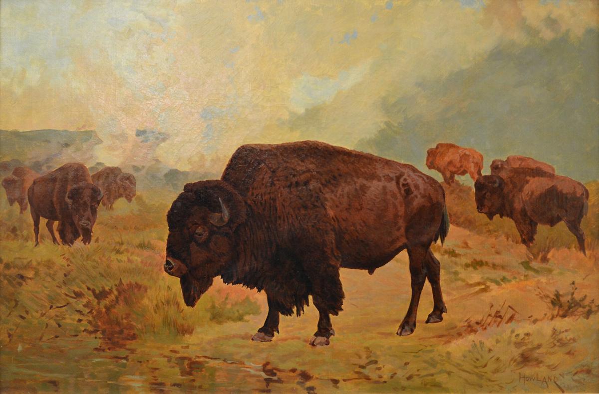 'Buffalo on the Plains'